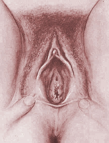 An approved list of things that can go into your vagina sheknows